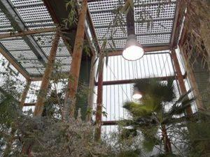 Le jardin botanique : la nature à portée de ville